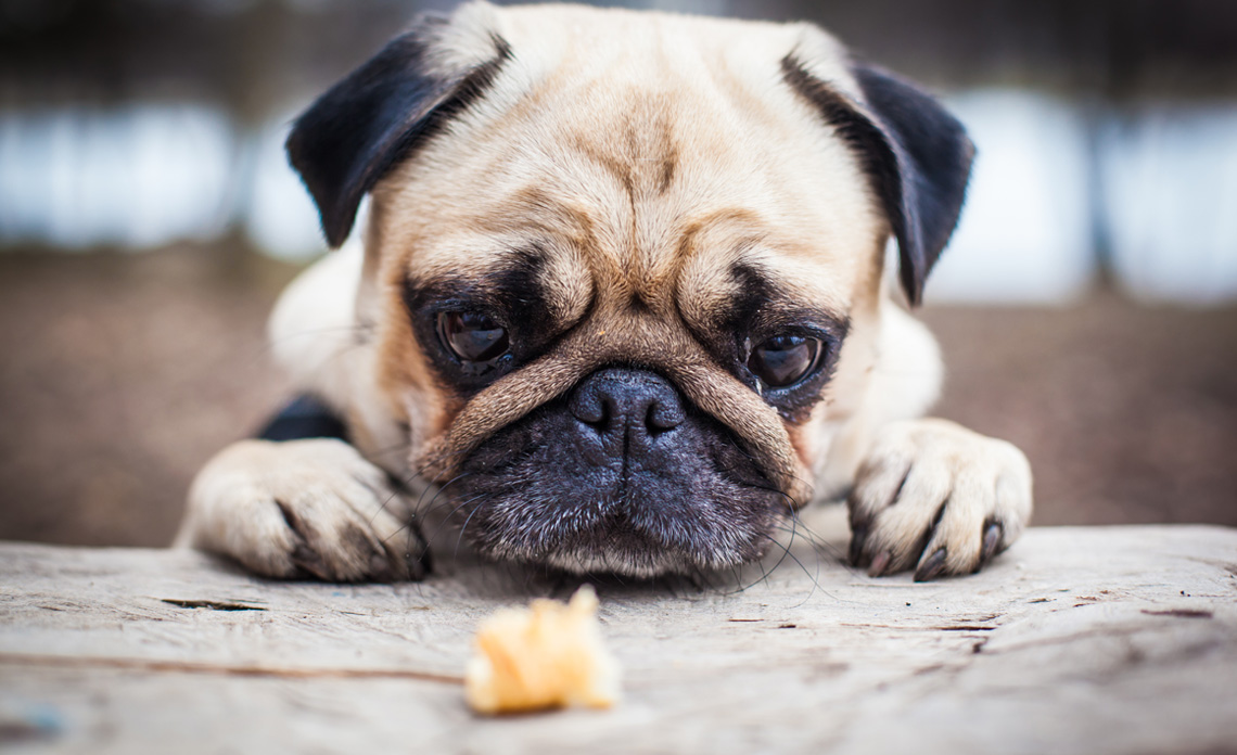 Dog-Common-Diseases-Featured-Image-1